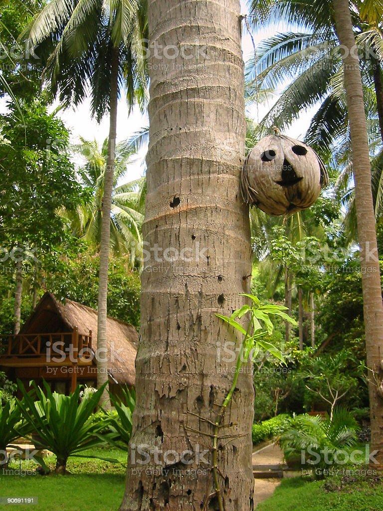 coconut head tropical resort koh lanta thailand royalty-free stock photo
