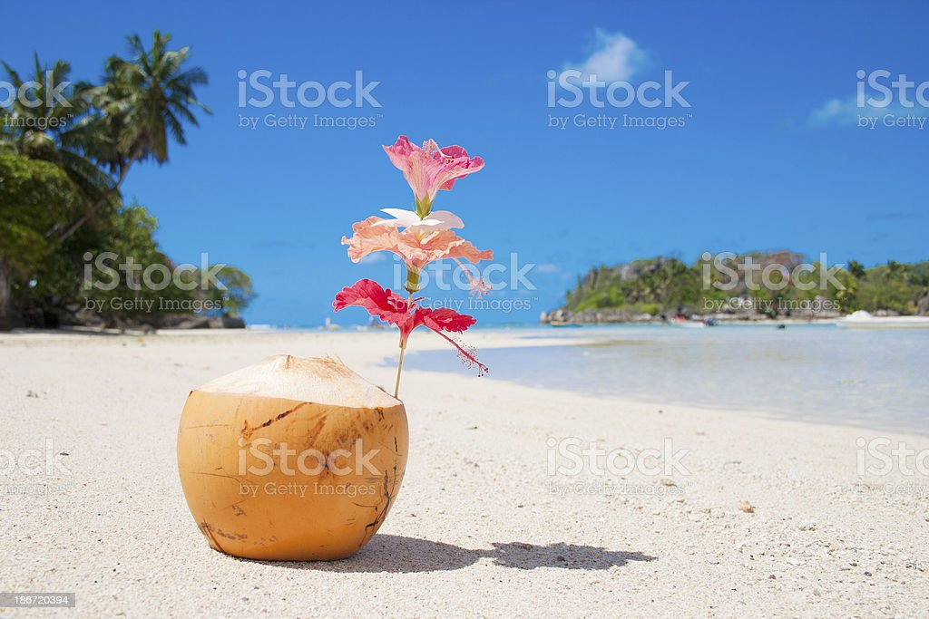 Coconut in Seychelles royalty-free stock photo