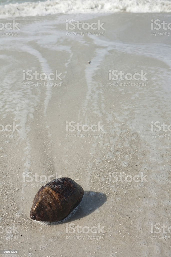 Coconut in the Surf stock photo