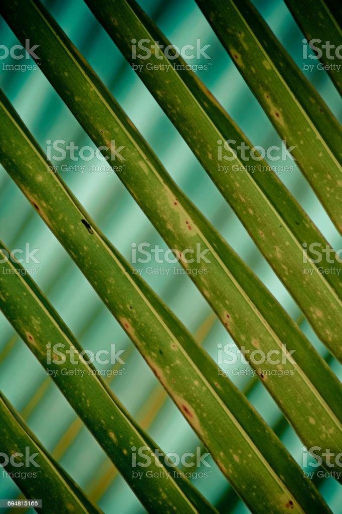 coconut leaf backside light in the morning stock photo
