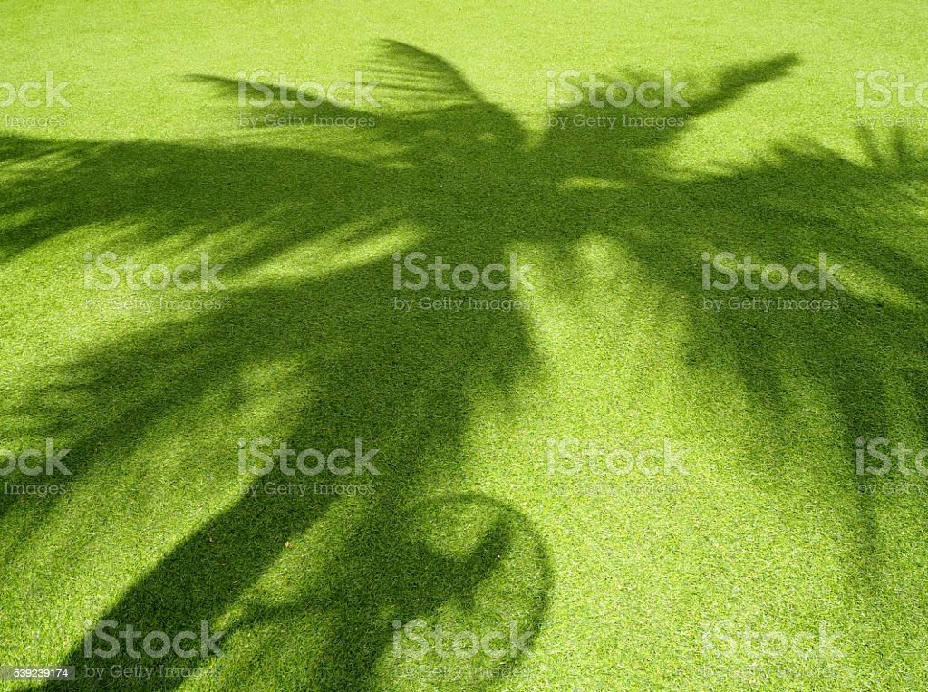 Coconut leaves ' s shadow stock photo
