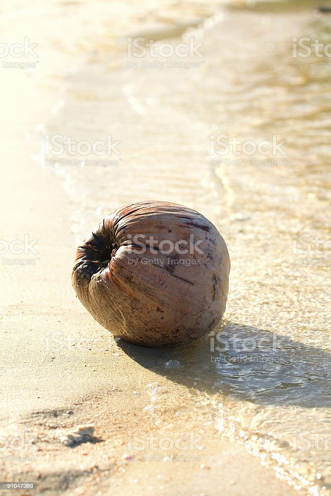 coconut on sandy beach royalty-free stock photo