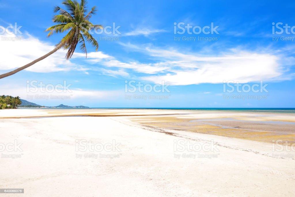 Coconut palm on the beach stock photo