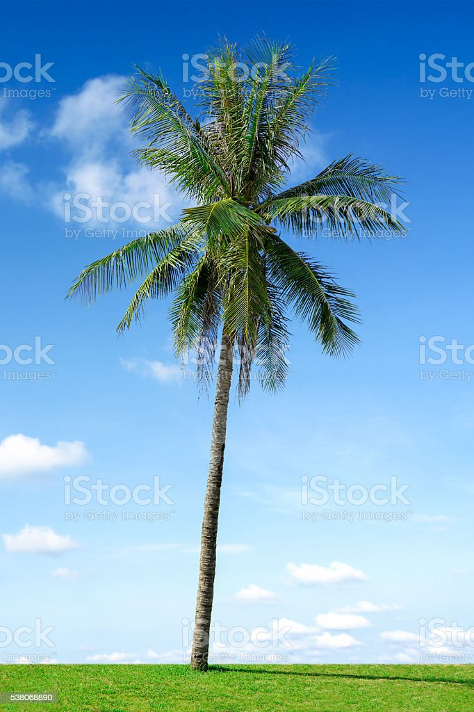 Coconut palm tree and cloudy blue sky in Thailand stock photo