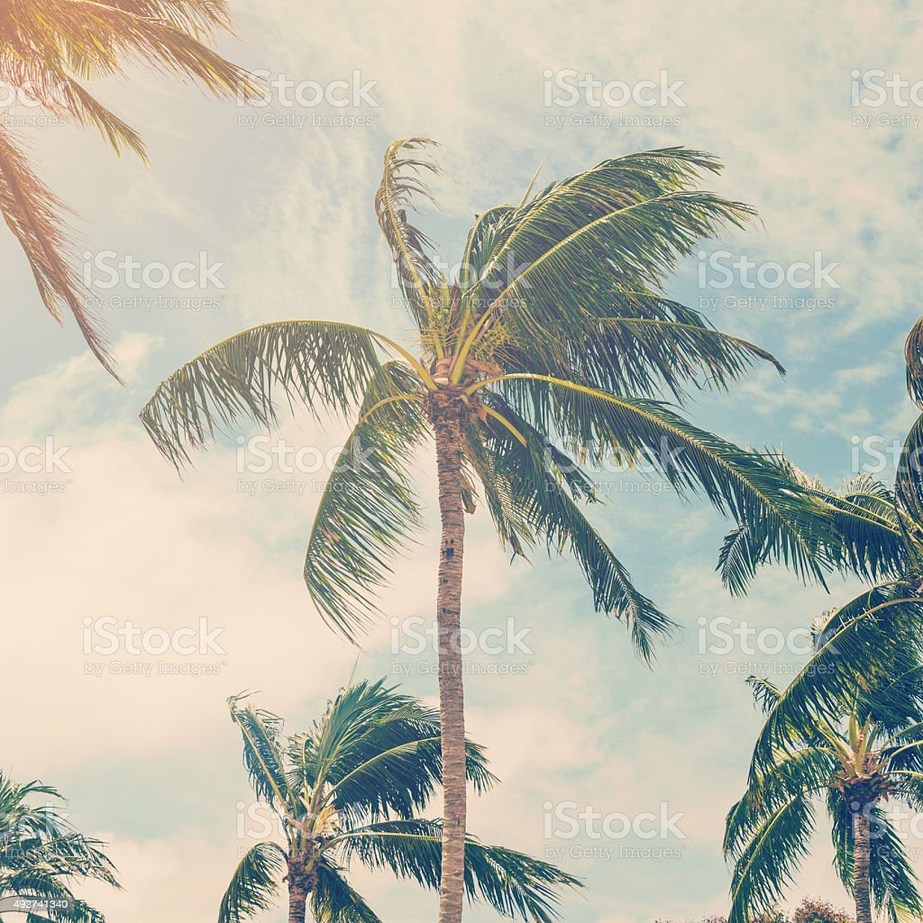 coconut palm tree on beach of vintage style stock photo