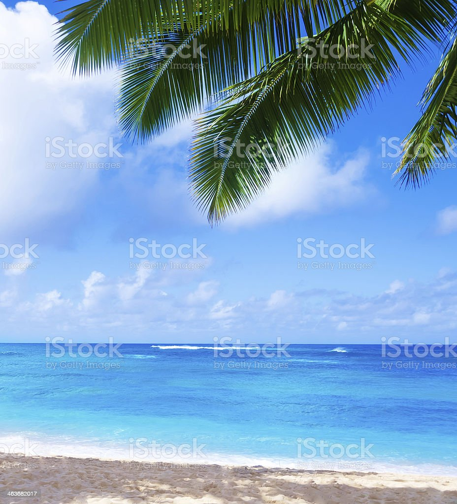 Coconut Palm tree on the sandy beach in Hawaii, Kauai stock photo