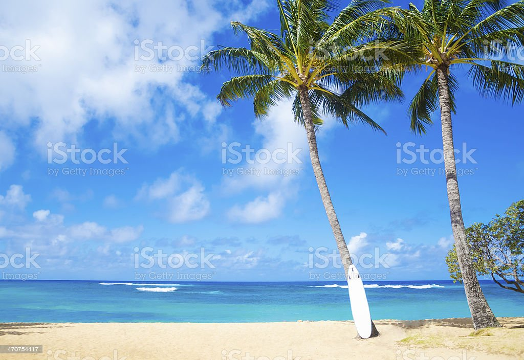 Coconut Palm tree with curfboard in Hawaii stock photo