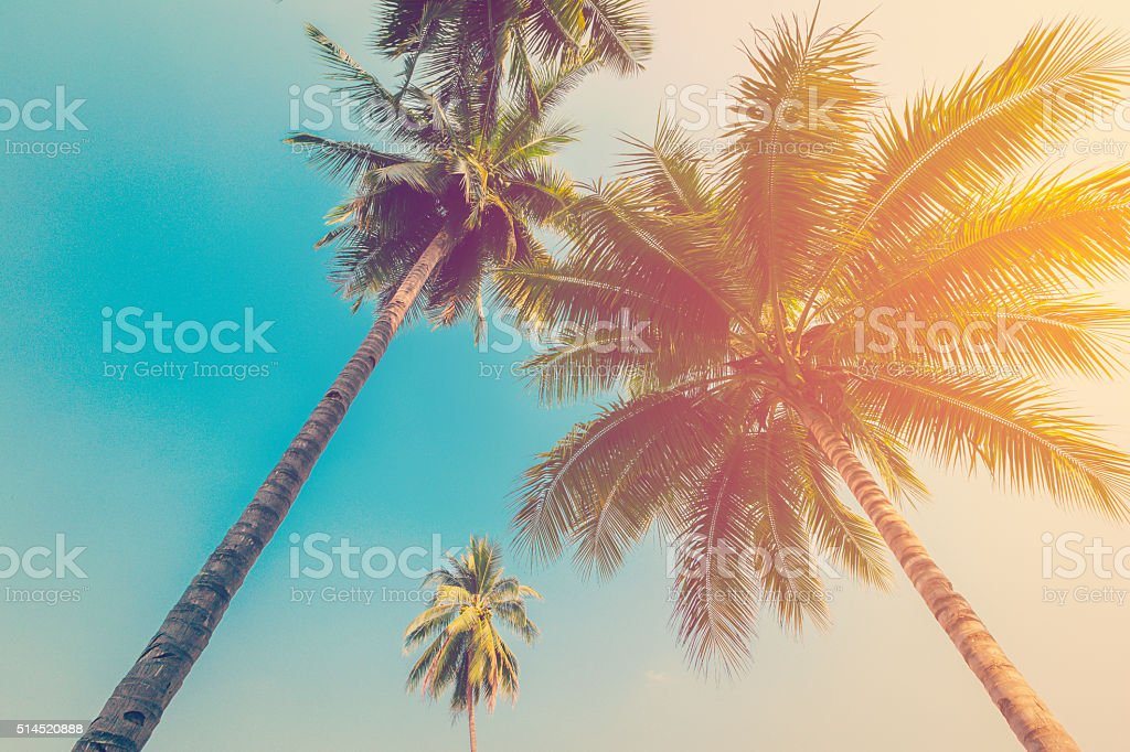 Coconut palm tree with vintage effect. stock photo
