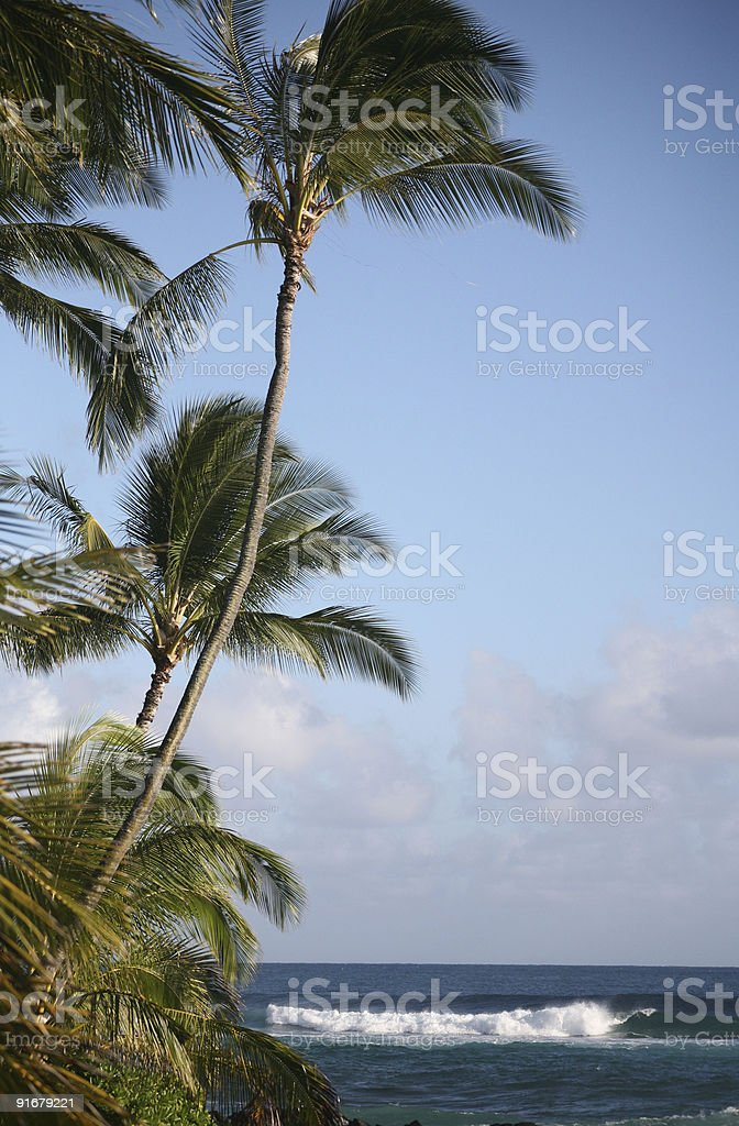 Coconut palm tree with waves royalty-free stock photo