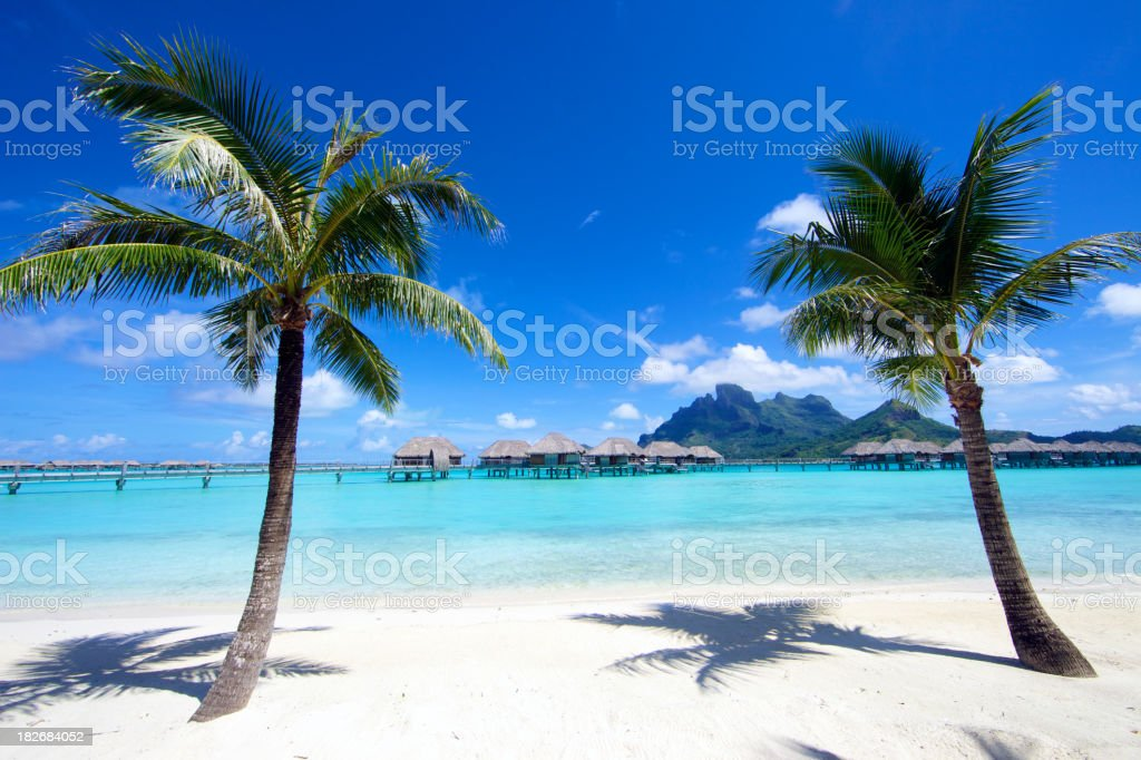Coconut Palm Trees in Bora-Bora Island royalty-free stock photo