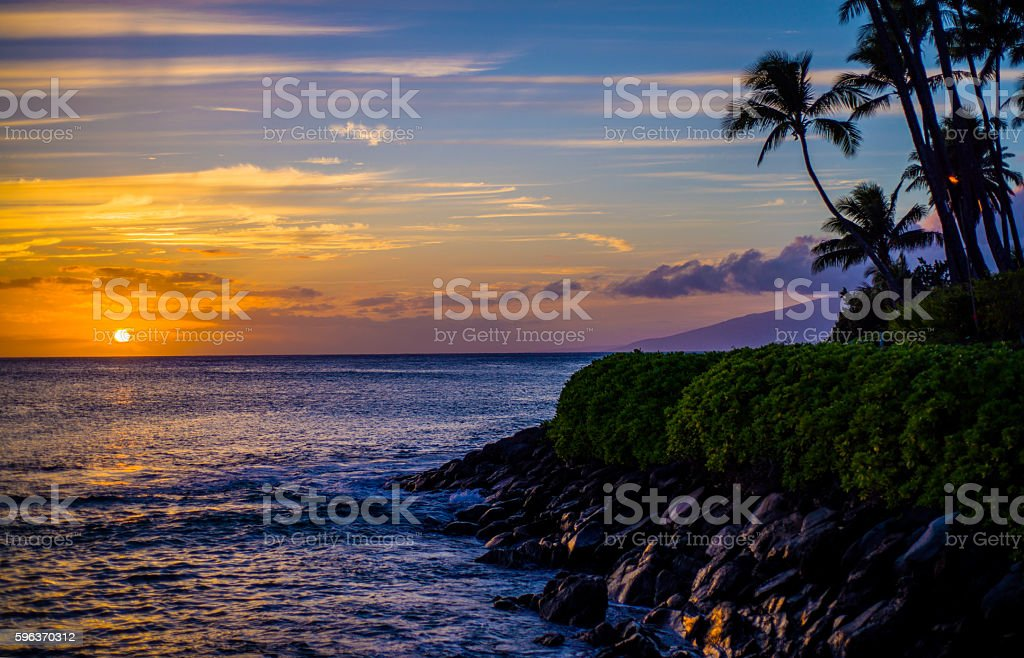 coconut palms, lava shoreline, maui sunset stock photo