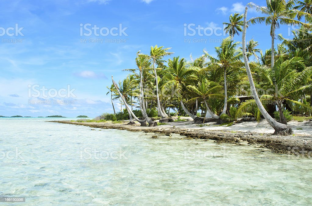 Coconut palms on a pacific island royalty-free stock photo