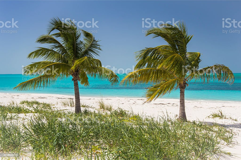 Coconut palms on the beach. stock photo
