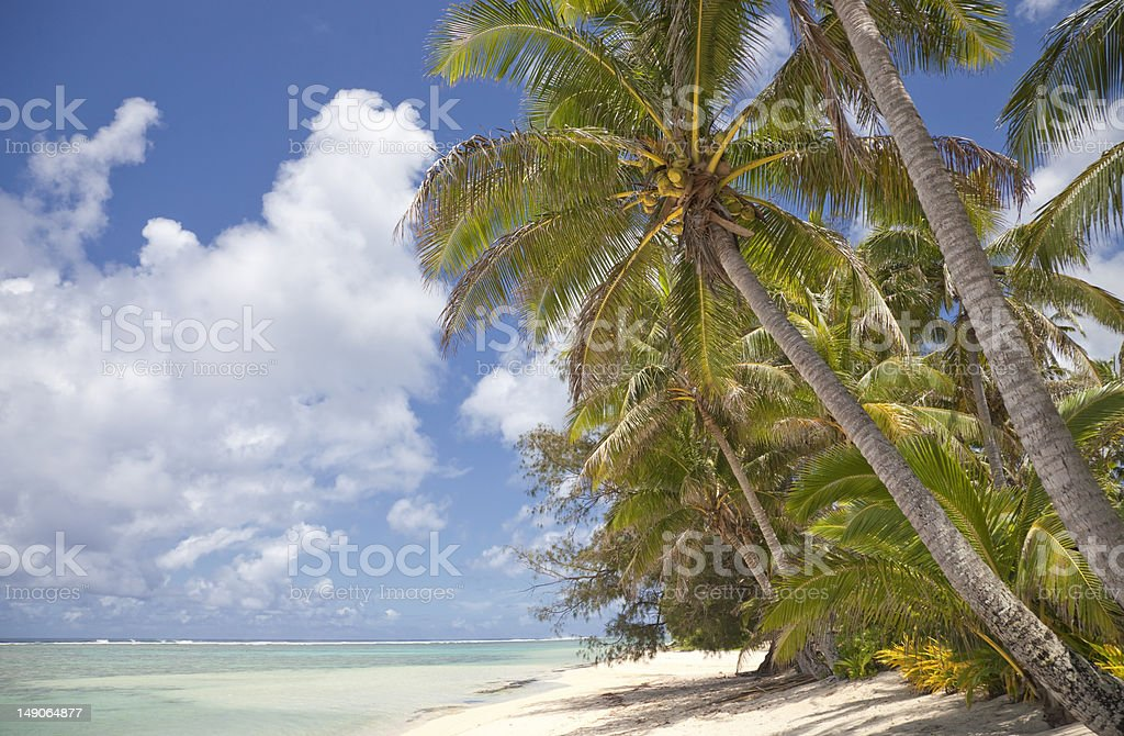 Coconut Palms on Tropical Beach royalty-free stock photo