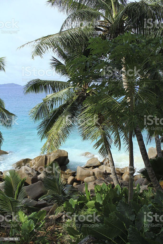 cocotiers, palm,heaven, paradis, ocean royalty-free stock photo