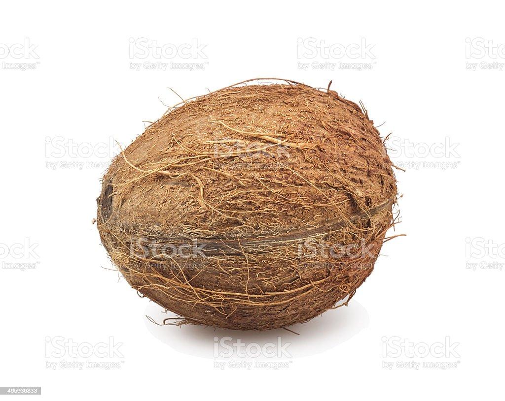 coconut stock photo