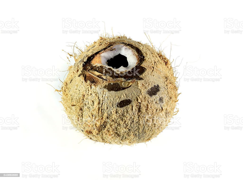 Coconut shell isolated on white background. stock photo