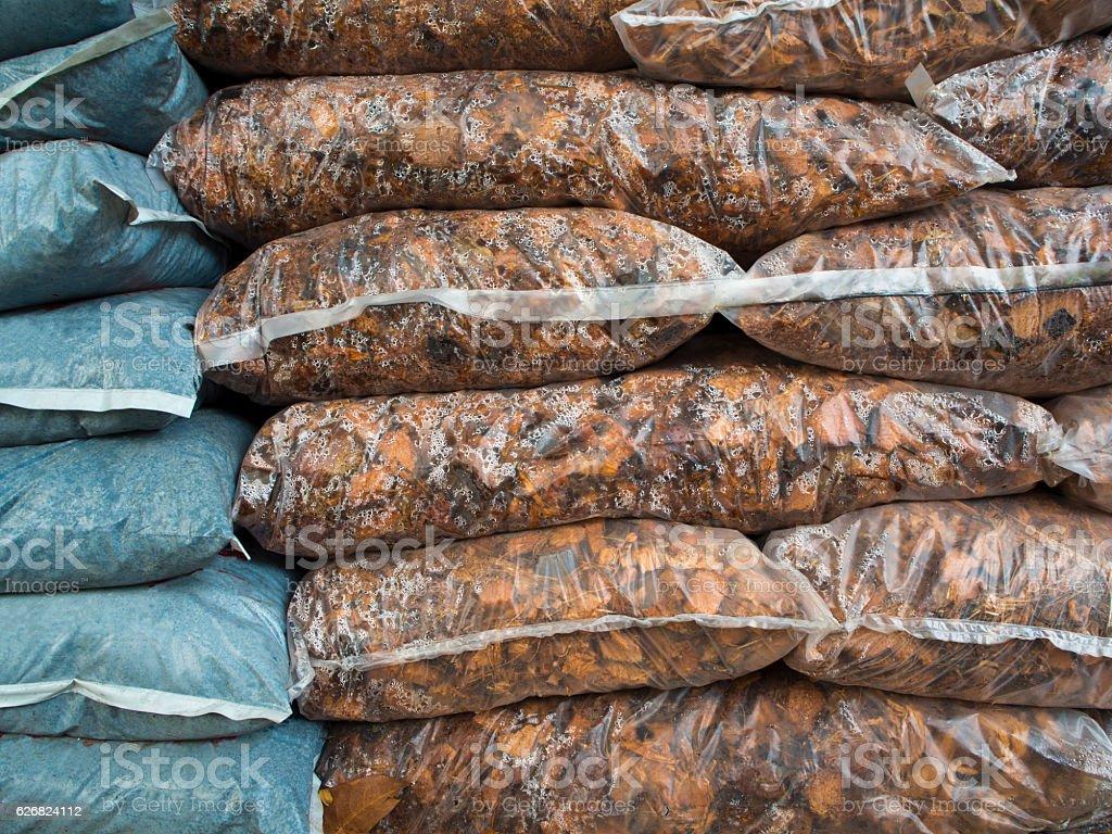 Coconut spathe stock photo