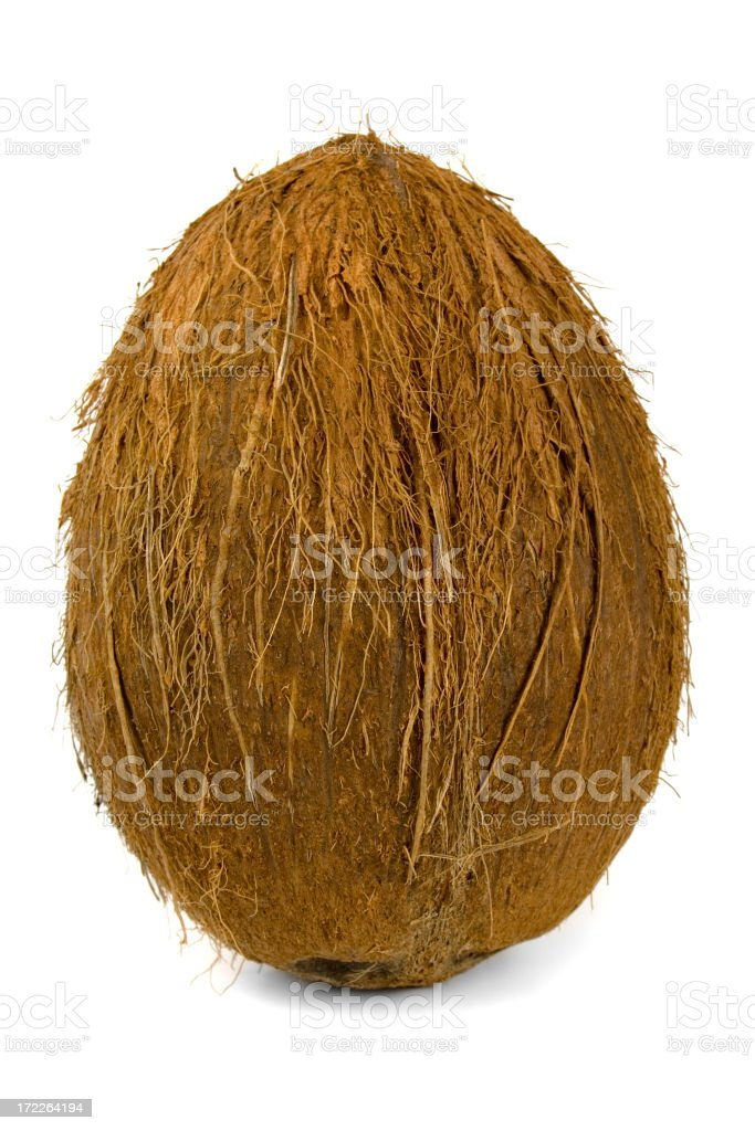 Coconut standing royalty-free stock photo