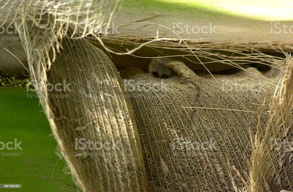 coconut straw royalty-free stock photo