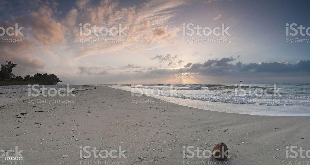Coconut sunburst tropical beach royalty-free stock photo