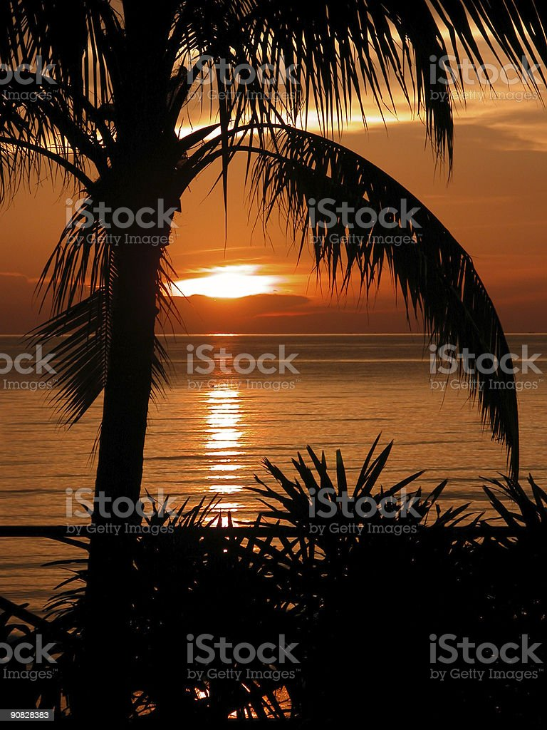 Coconut Sunset - Natural Wonders royalty-free stock photo