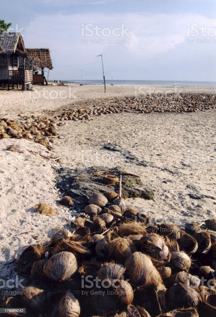 coconut tide royalty-free stock photo
