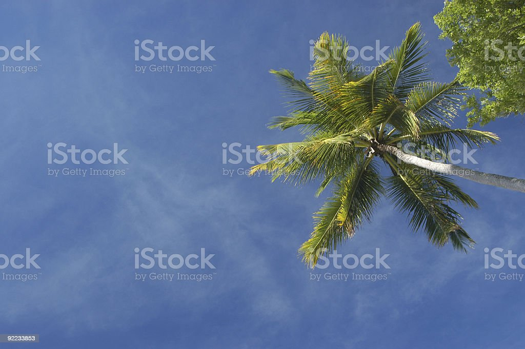 Coconut tree and blue sky royalty-free stock photo