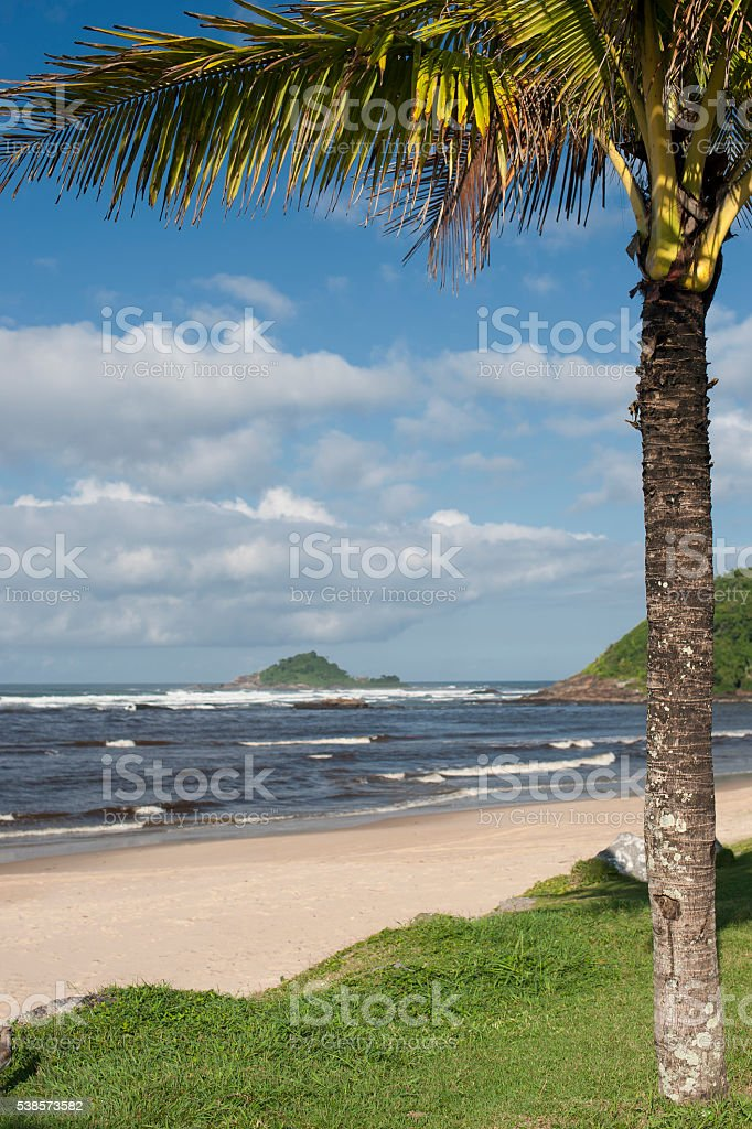 Coconut Tree and Sea stock photo