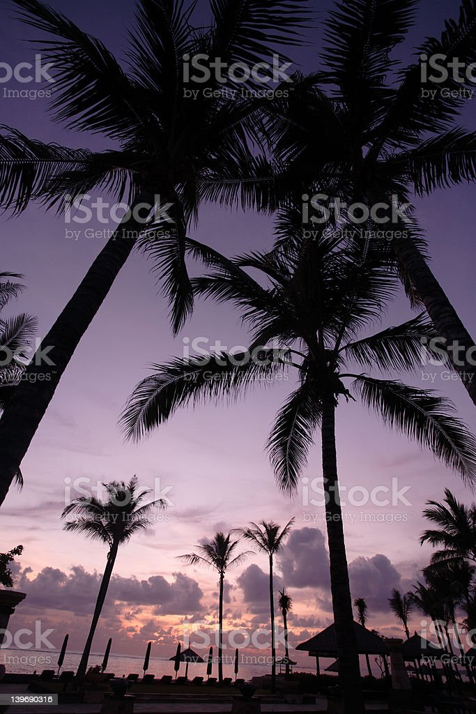 Coconut Tree at sunrise royalty-free stock photo