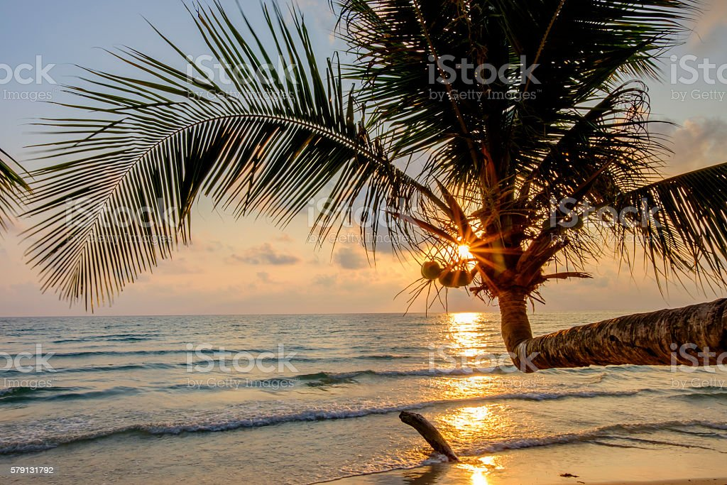 Coconut tree near the beach stock photo