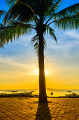 Coconut tree on beach with warm light and sunset background