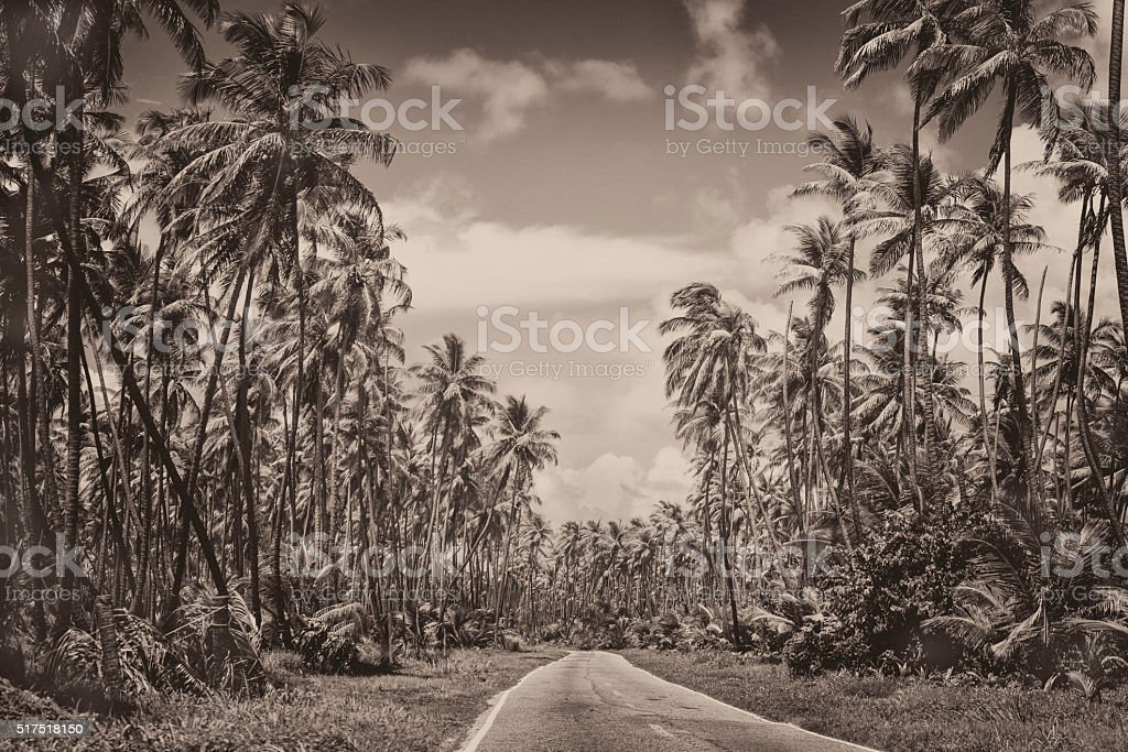 Coconut tree road BW royalty-free stock photo