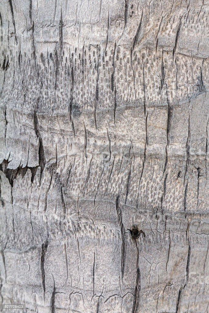 Kokosnuss Baum Textur Lizenzfreies stock-foto