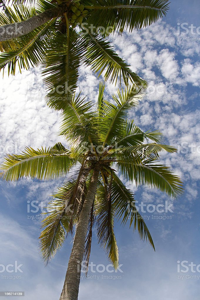 Coconut tree with cloudscape stock photo
