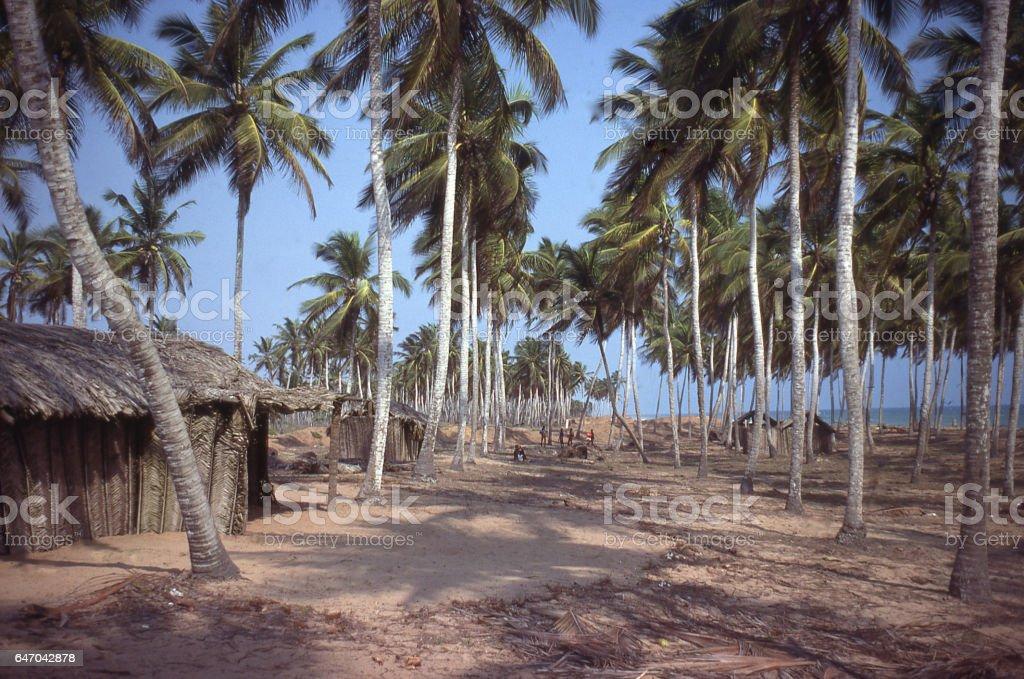 Coconut trees along coastal zone outside Lome Togo Africa stock photo