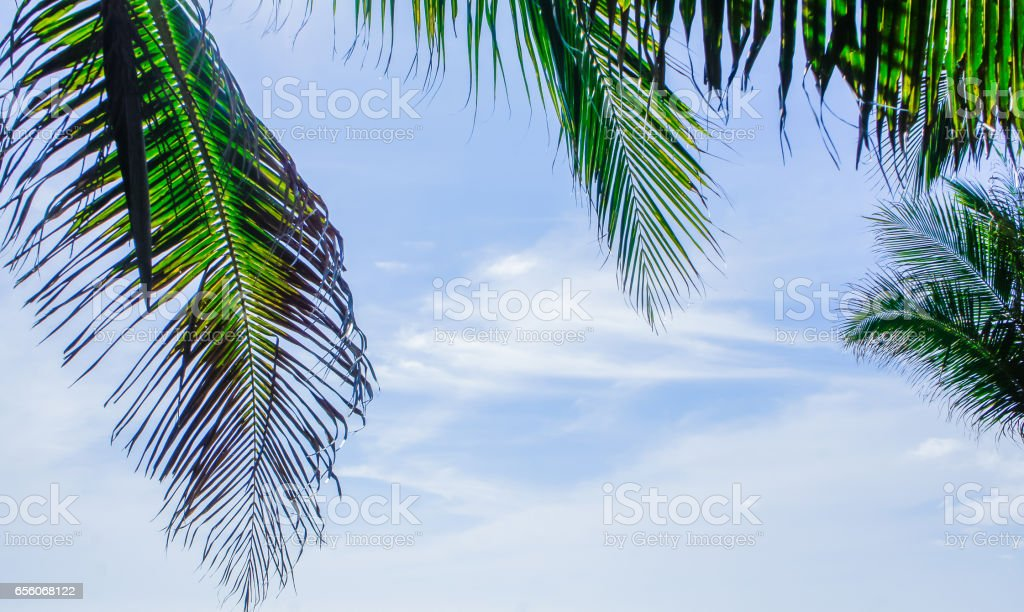 Coconut trees and blue sky, concept for background texture. stock photo