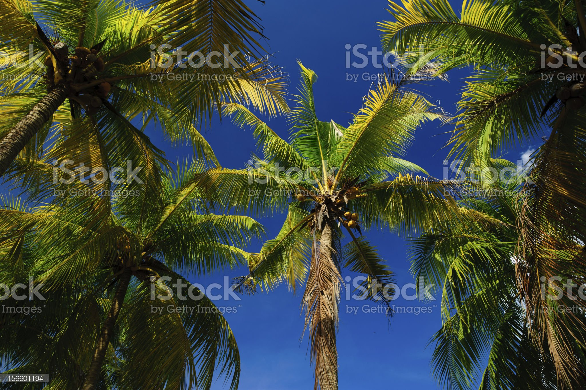 Coconut trees and blue sky. royalty-free stock photo