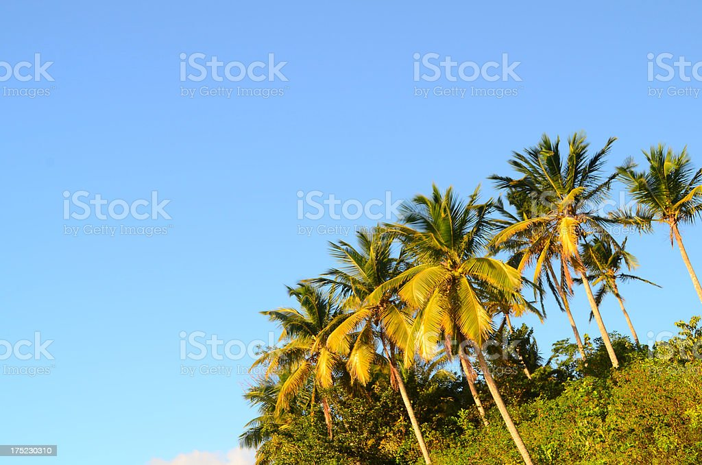 coconut trees and blue sky royalty-free stock photo