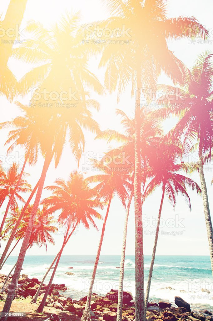 Coconut trees and turquoise Indian Ocean stock photo