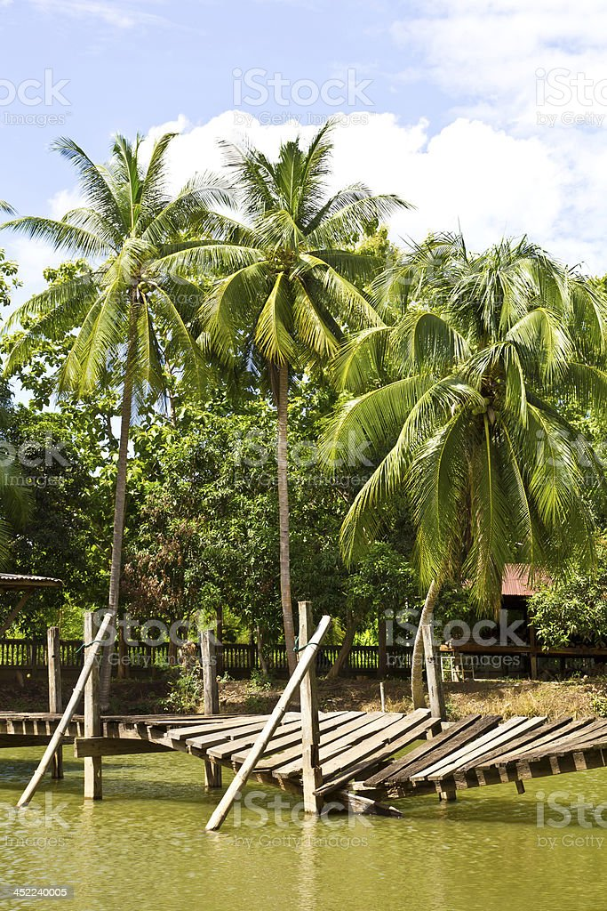 coconut trees beside a pond royalty-free stock photo