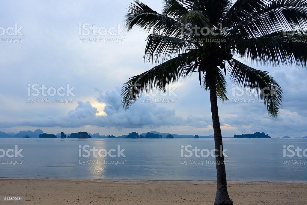 Coconut trees by the morning sea, Koh Yao Noi , stock photo