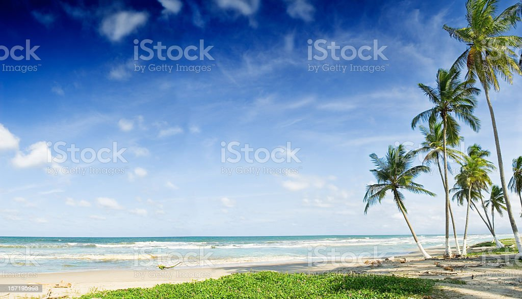 Coconut trees in a white sand beach royalty-free stock photo