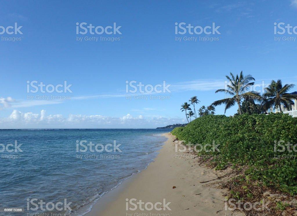 Coconut Trees line Kahala Beach stock photo