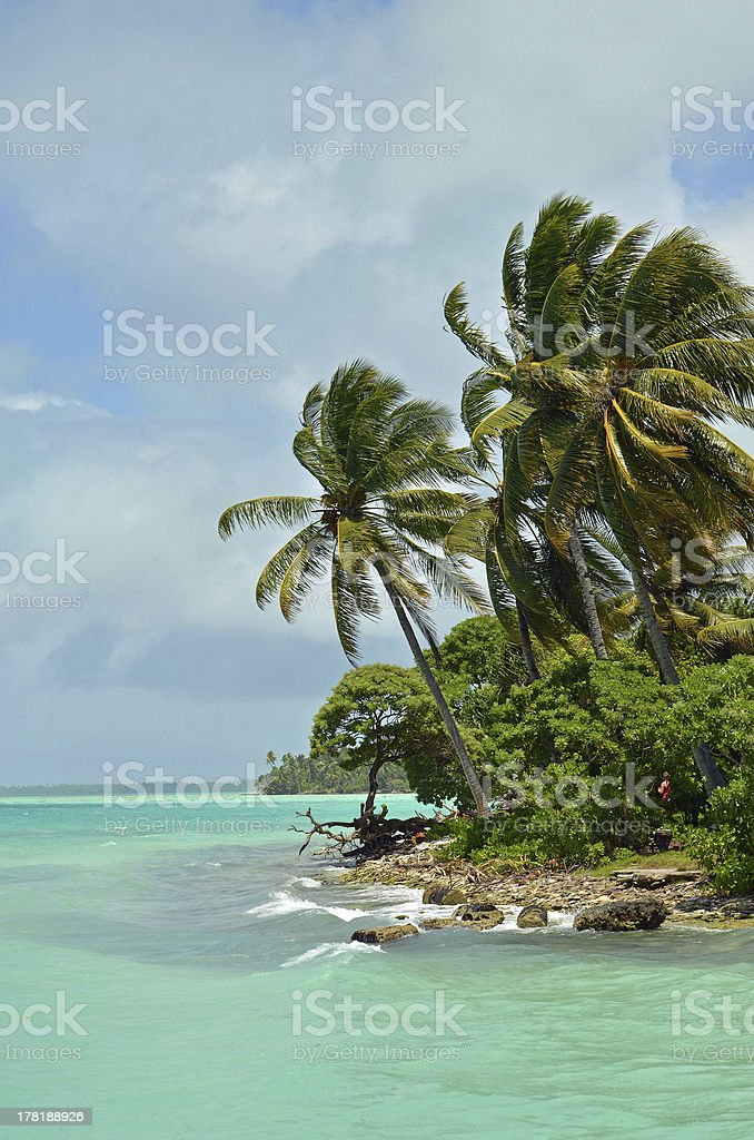 Coconut Trees on Fanning Island stock photo