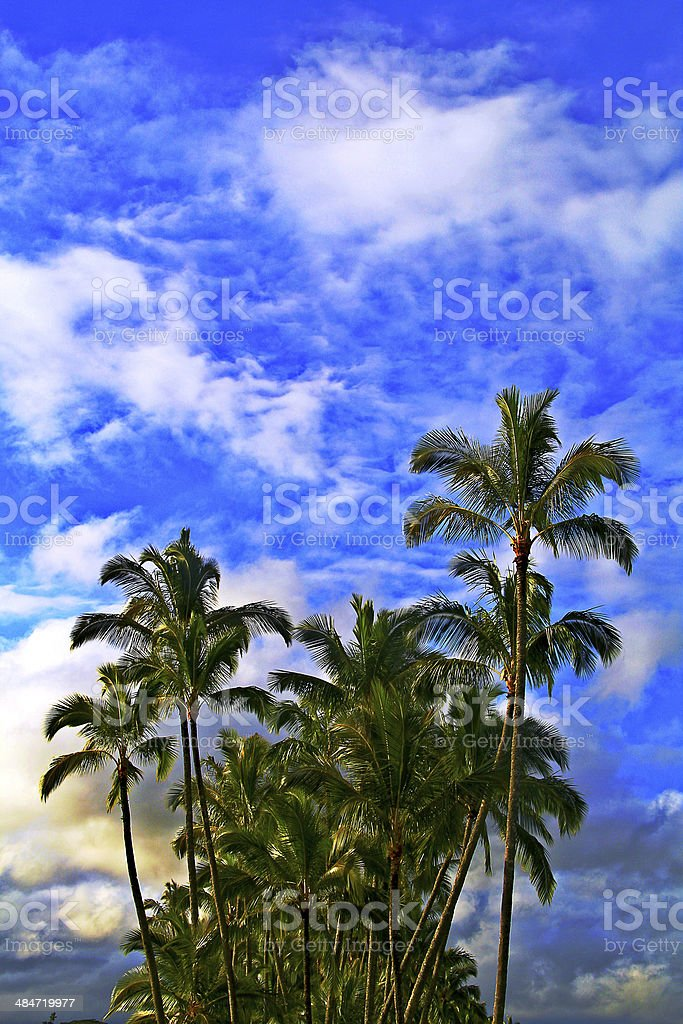 Coconut Trees stock photo