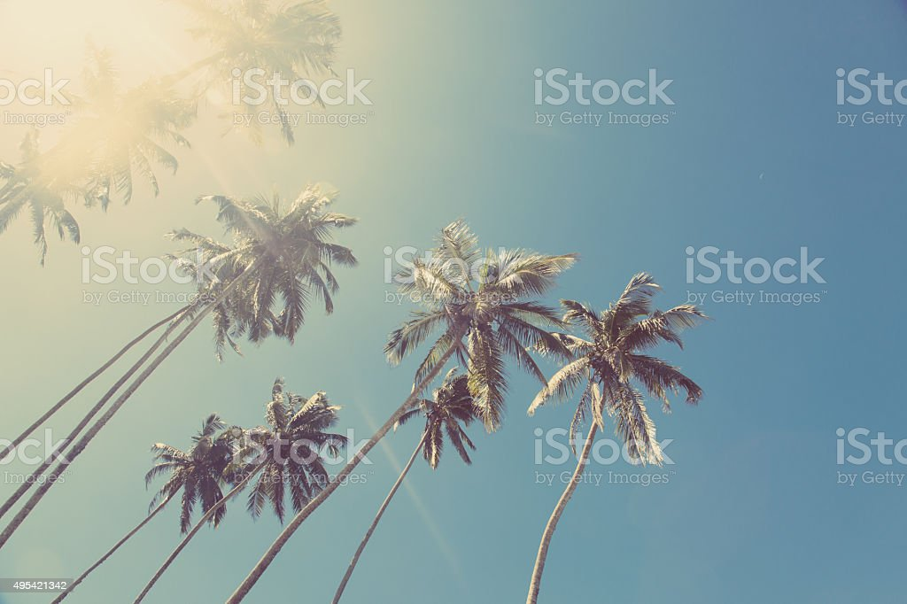 Coconut trees (Palms) stock photo