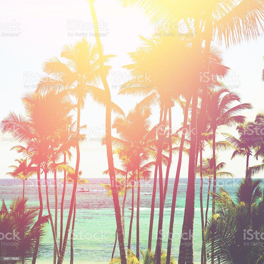 Coconut trees stock photo