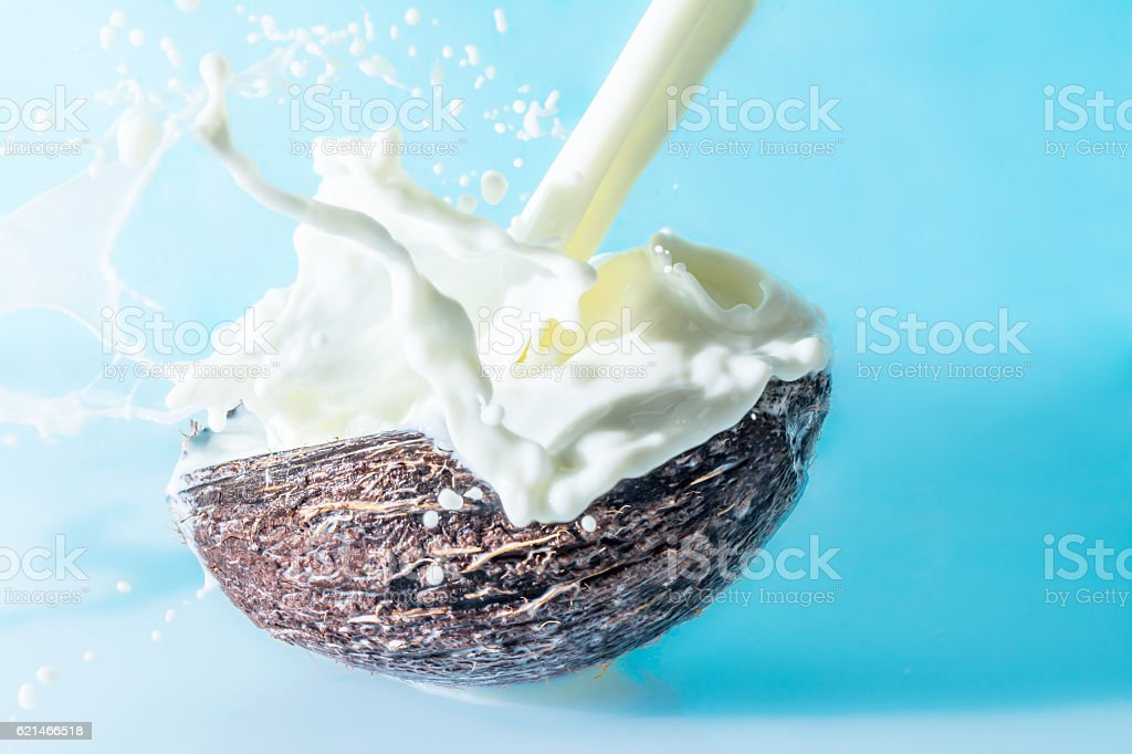 Coconut with milk splash on a blue background stock photo