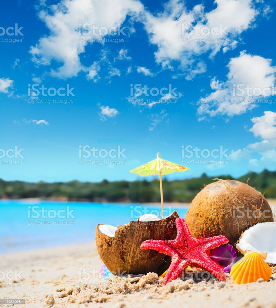 coconuts and starfish by the shore stock photo